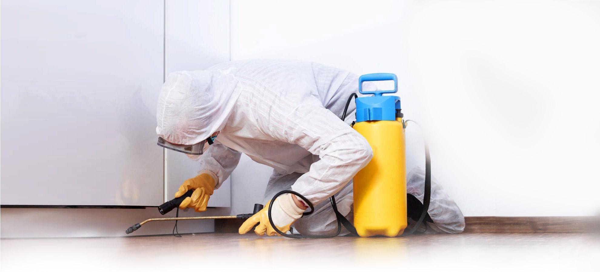 Специализированные службы по уничтожению насекомых